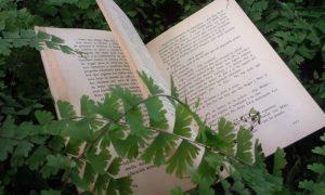 autores misioneros - Libroo
