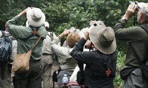 birdwatching - observadores
