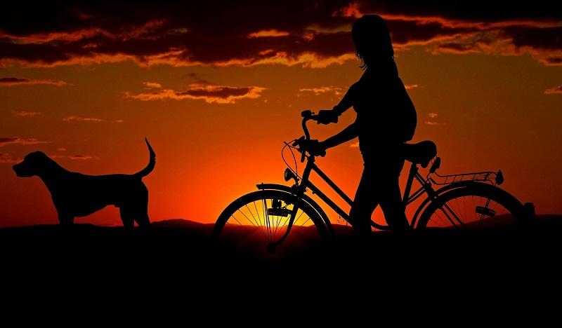 ocio - Bicicleta