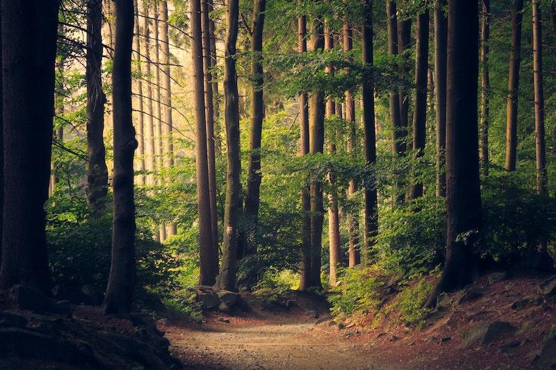 ambiental - Bosque