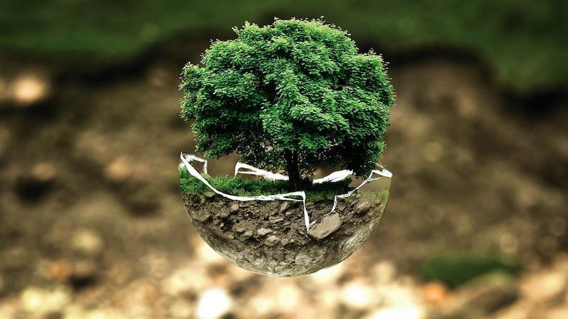 ambiental - Importancia Ambiental
