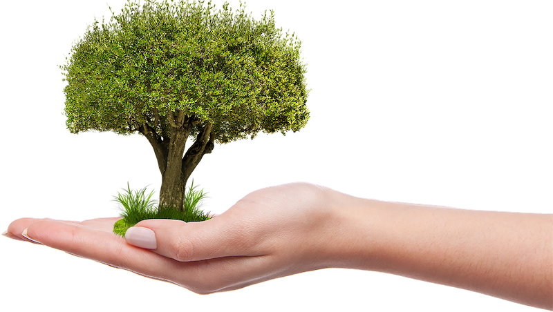 ambiental - Plantar Un Arbol