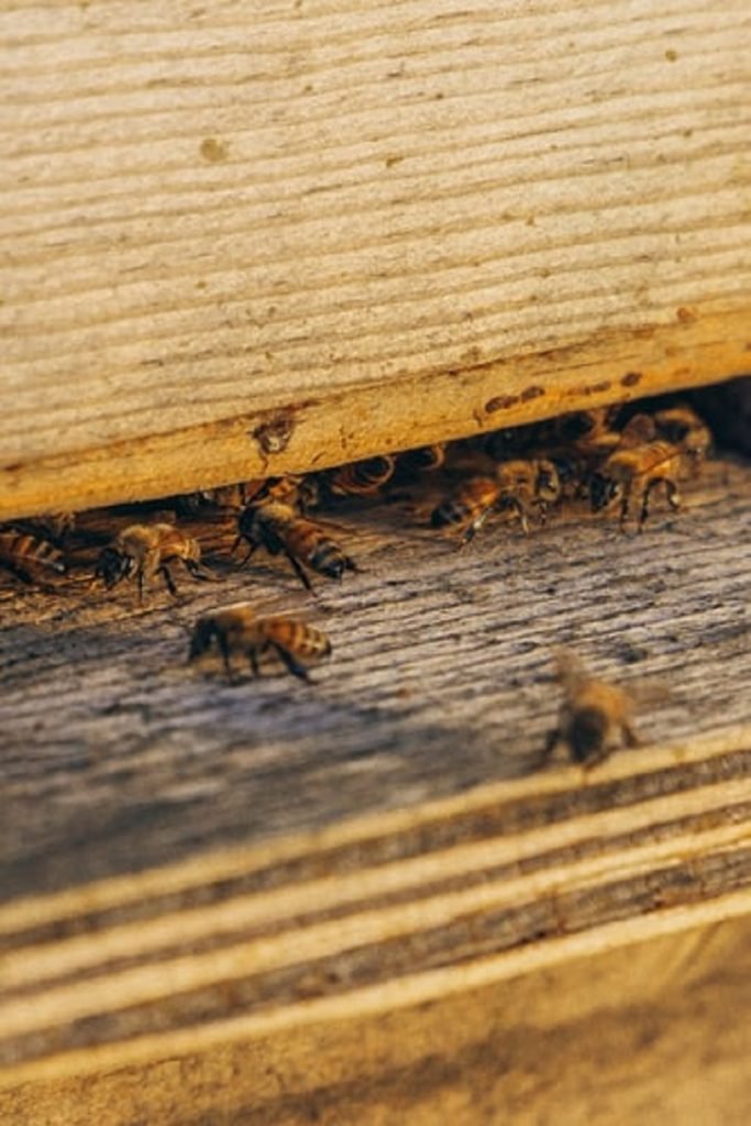 abejas - Panal