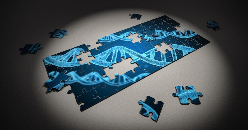 Puzzle -mapa genetico