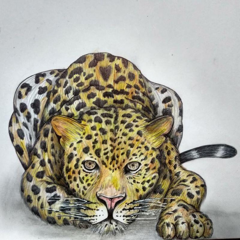 curso de dibujo - Tigre