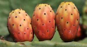 Ficodindia - frutto color arancione