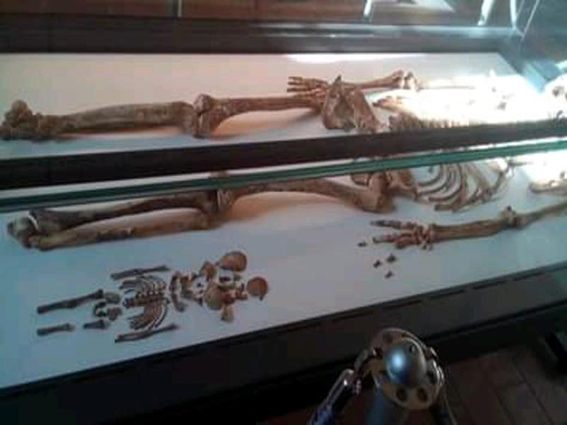 Calco riprodotto nel Museo civico di Ostuni con soggetto la mamma più antica del mondo