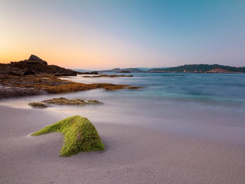 Alghe E Mare