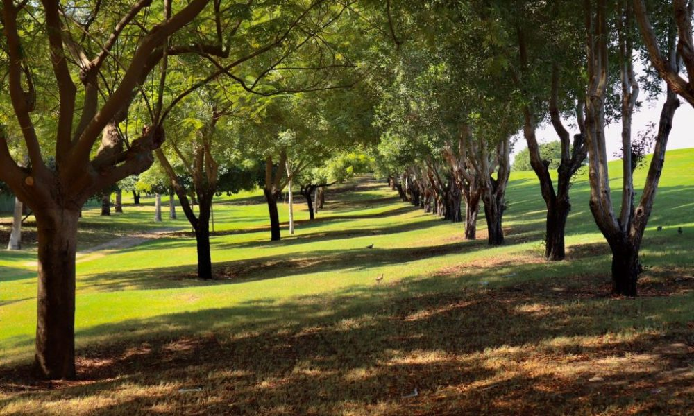 I parchi più belli - Alberi di Aspire Park