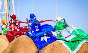 Corse dei cammelli - Cyber Fantini colorati sui cammelli