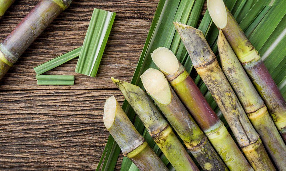 azucar - Sugar Cane