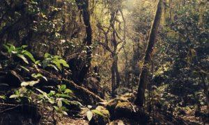 Naturaleza Tucumana