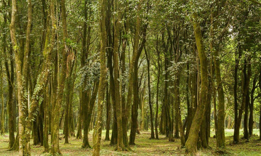 Paisaje natural en Tucumán