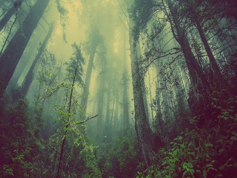 Tierra - Bosque
