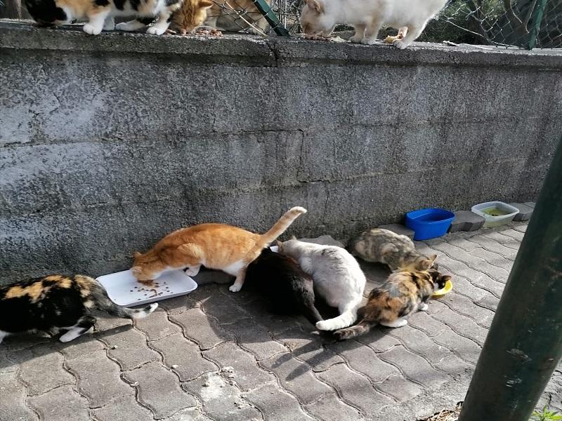 Colonie Feline: un gruppo di gatti-Foto: Franca Grio