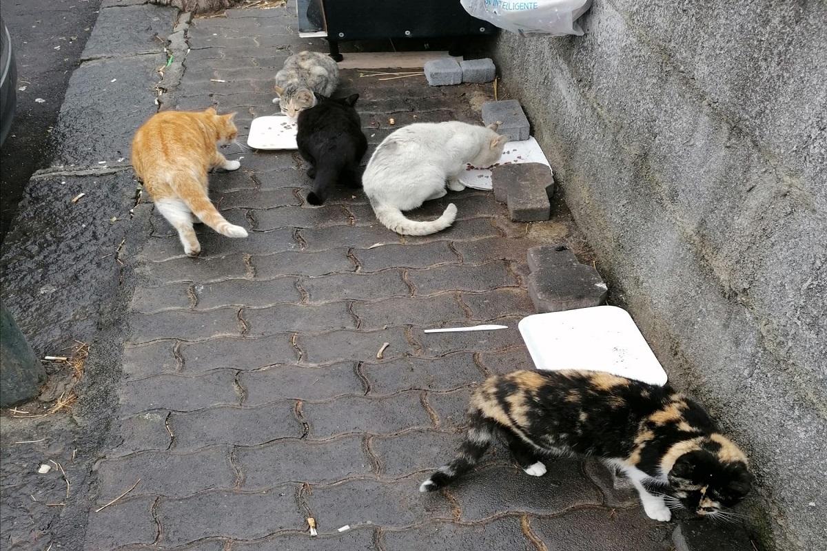 Colonie di gatti - Foto: Franca Grio