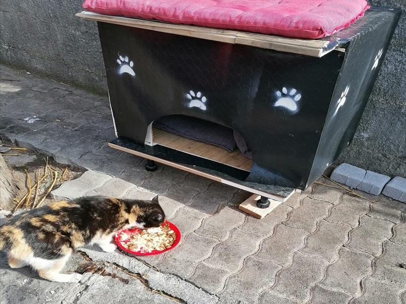 Cuccia per gatti randagi - Foto: Franca Grio